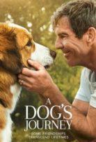 A Dog's Journey (2019) izle Türkçe Dublaj